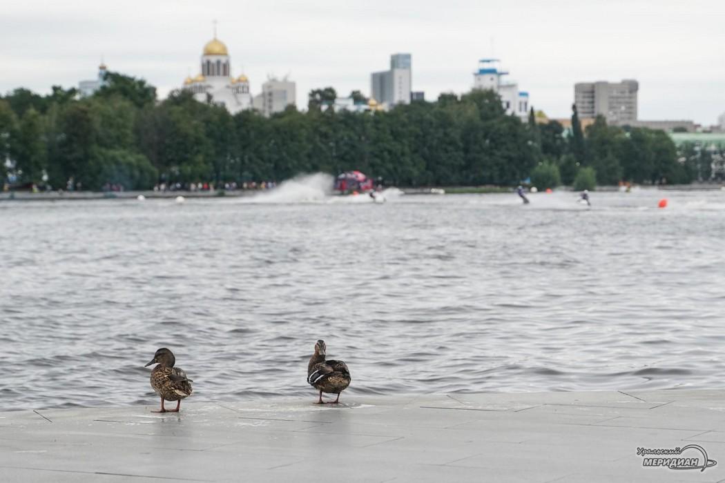 Екатеринбург утки
