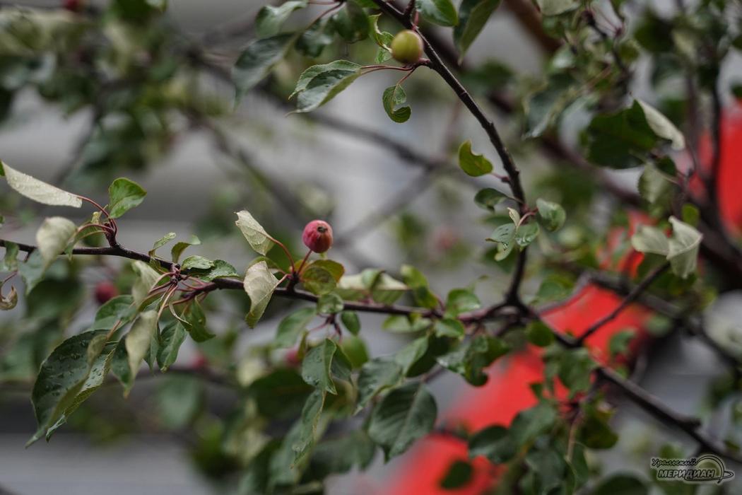 Екатеринбург озеленение деревья кустарник посадка