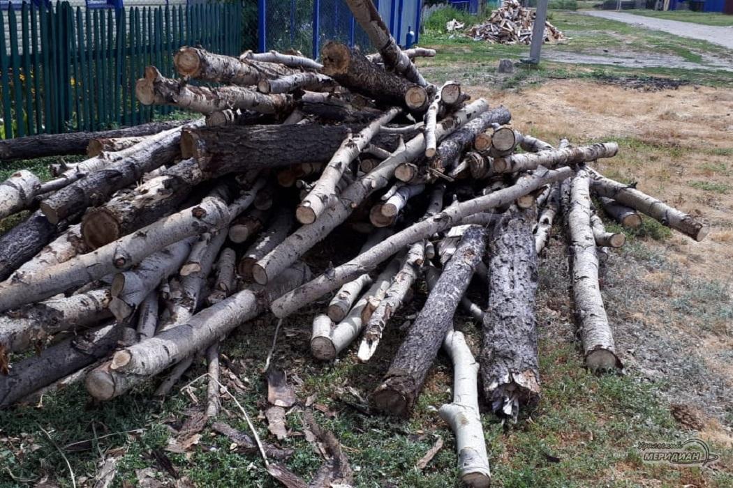 Губернаторские дрова