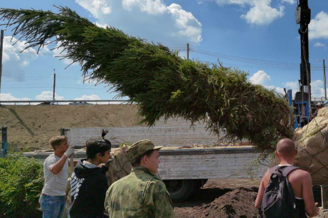 На Меридиане в Челябинске высадили ели