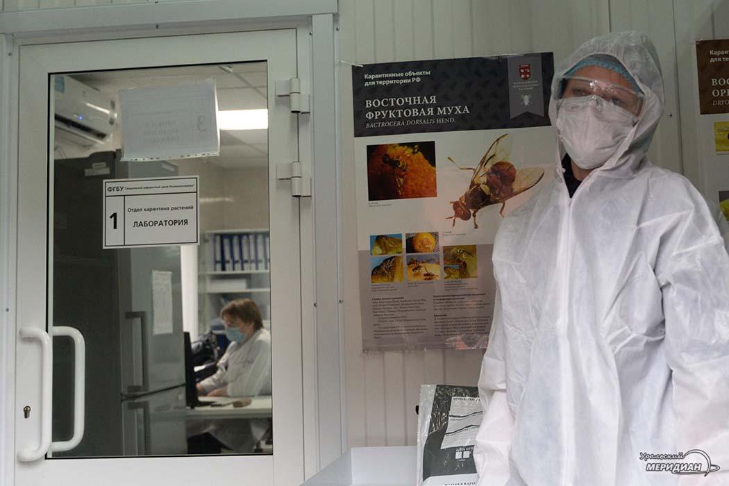 Россельхознадзор лаборатория карантин растений