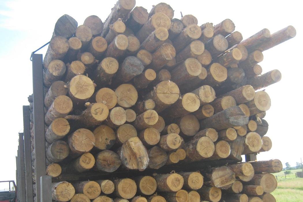 Тюменские таможенники пресекли вывоз свыше 180 тонн леса