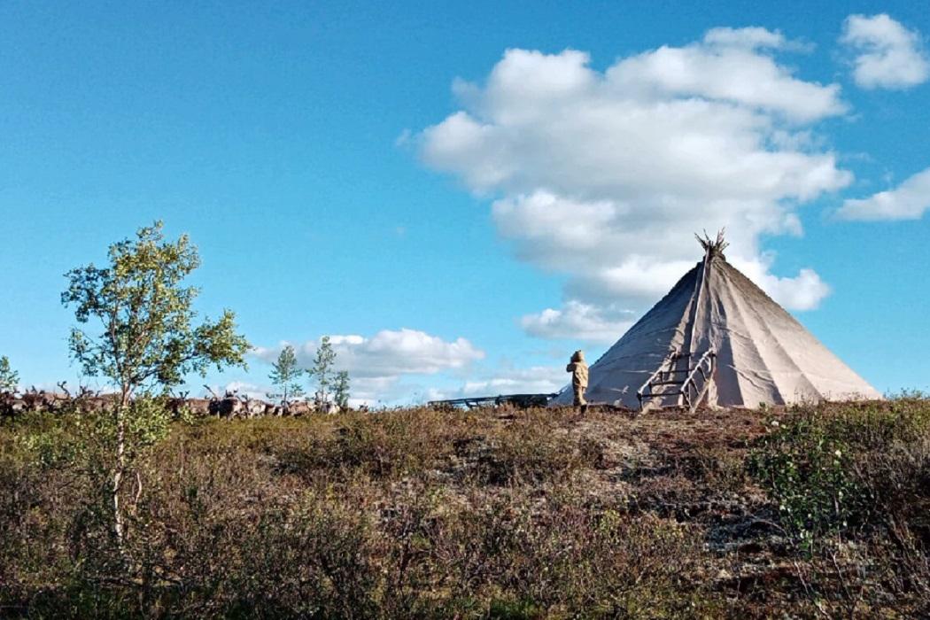 У оленей в Надымском районе в условиях изгороди появились первые сто телят