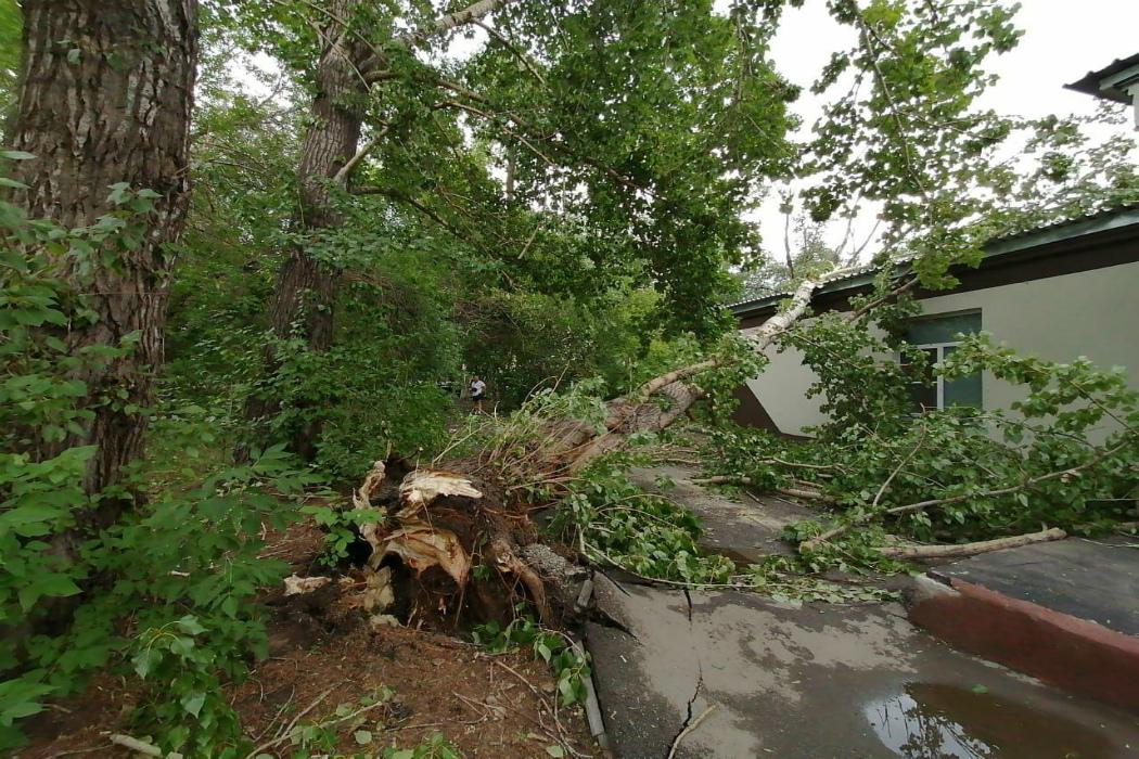 В Челябинске проводят расчистку улиц от поваленных деревьев