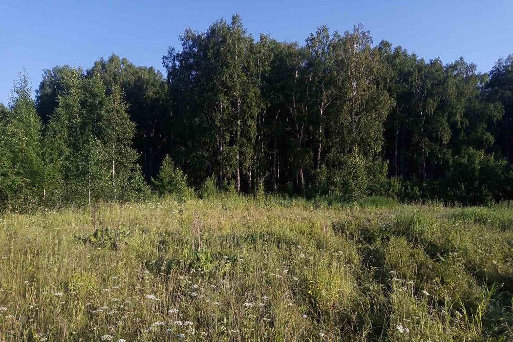 В Заводоуковском районе в лесу нашли тело женщины