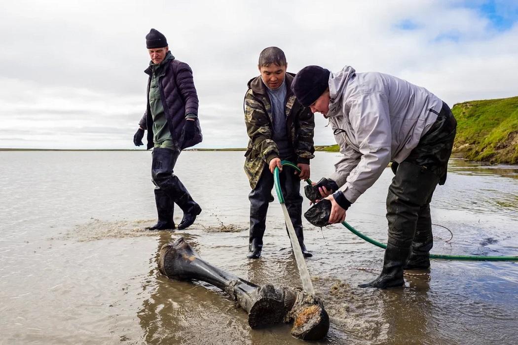 В ямальском озере найдены останки взрослого мамонта 5