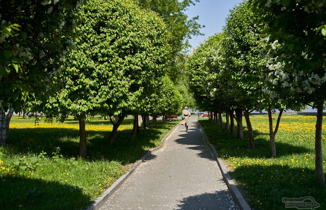 аллея парк