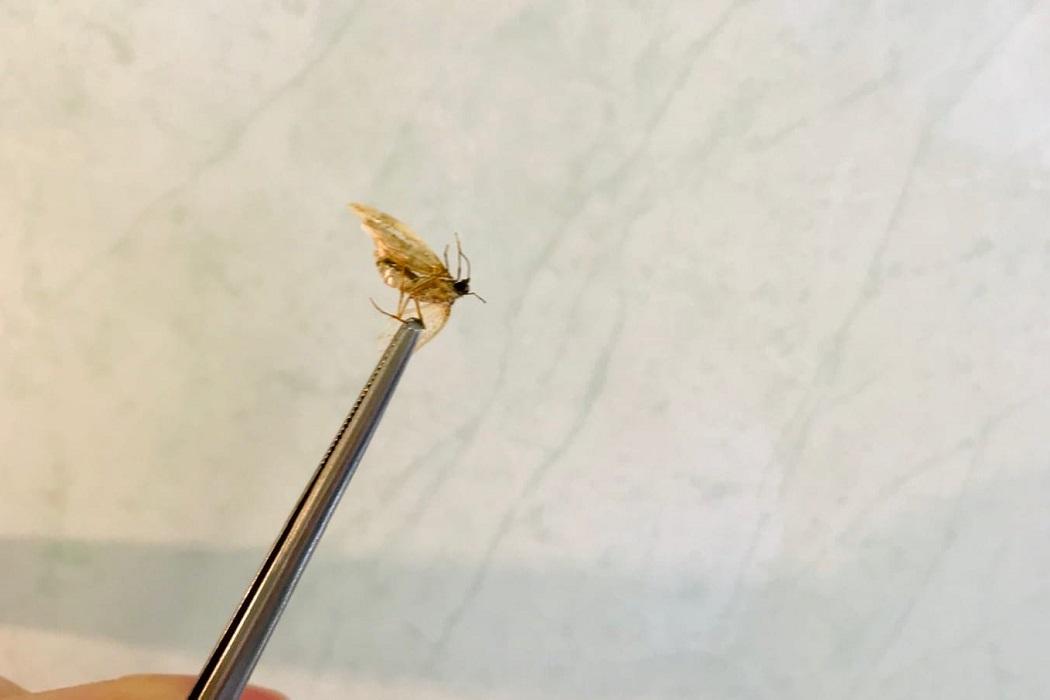 Тюменские врачи достали из уха пациента мотылька