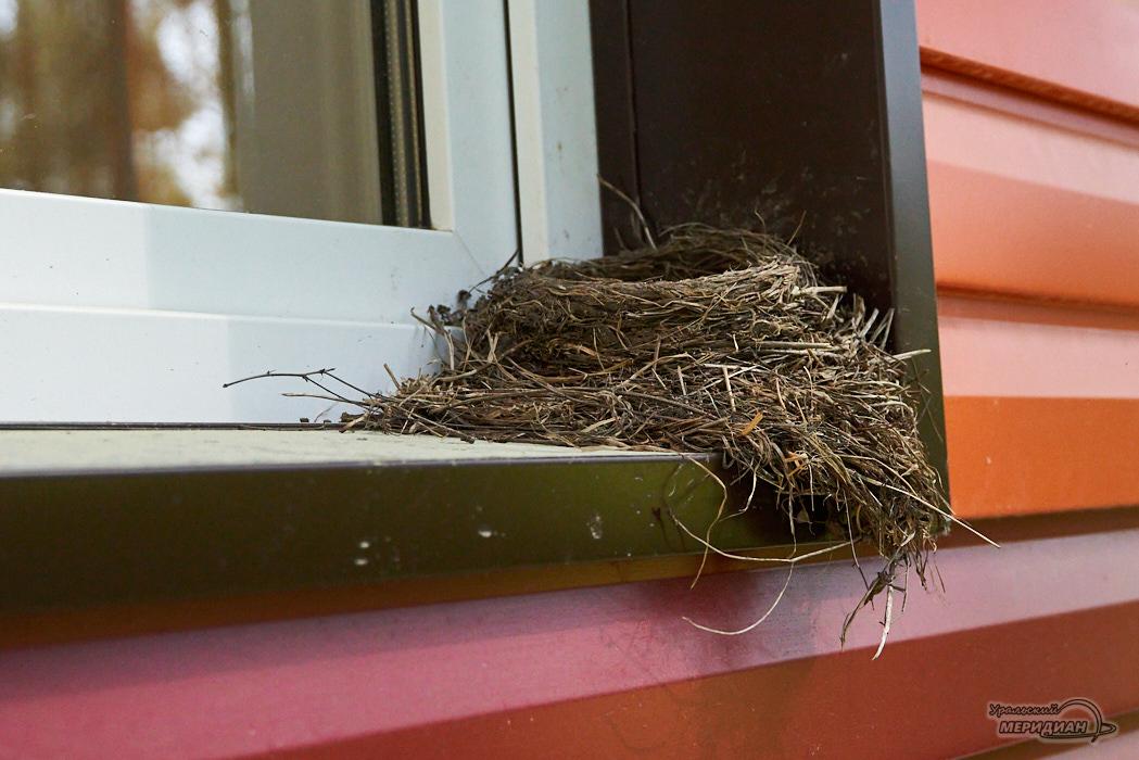 gnezdo pticy okno