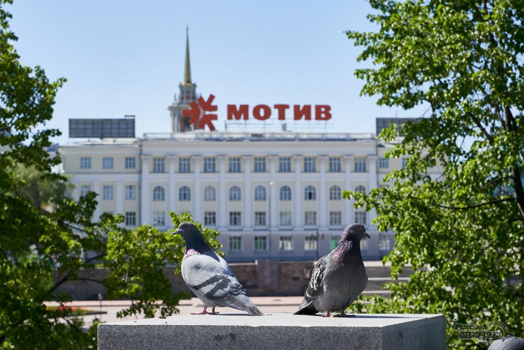 голуби мотив Екатеринбург
