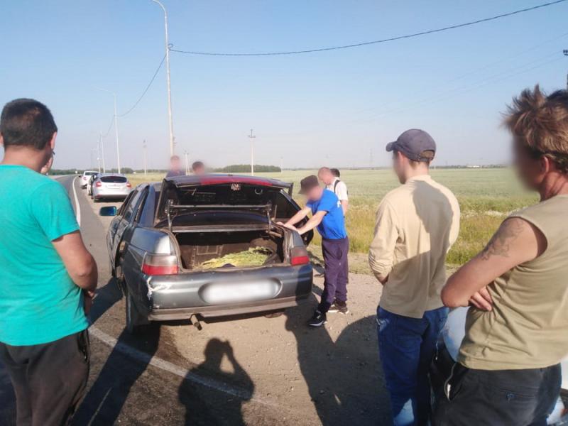 В Курганской области пенсионерка выращивала 523 куста мака