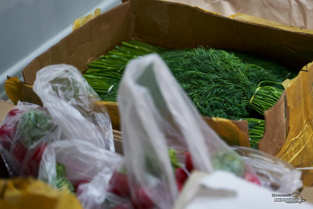 продукты зелень укроп редис