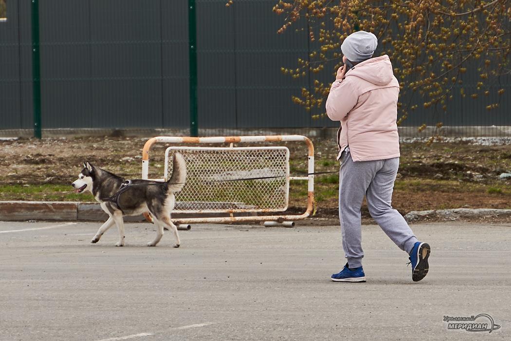 женщина пешеход собака прогулка